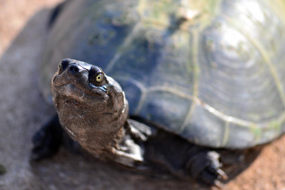 terrarium tortue